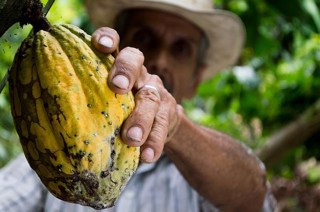 Propiedades y beneficios de los antioxidantes del cacao